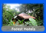 Forest Hotels